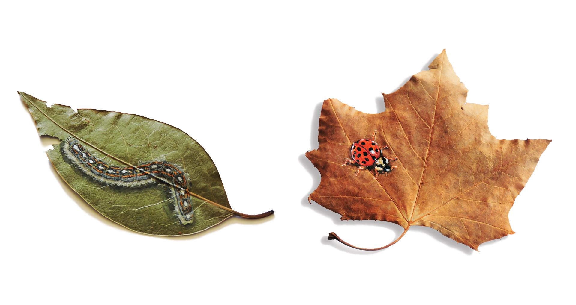 Visit LeafWorks Gallery